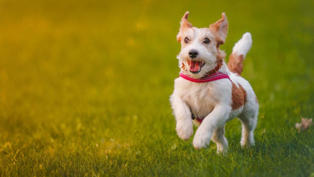Физическая форма собаки